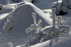 Schneebedeckt...