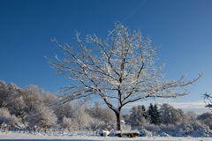 Schneebedeckter Baum im Sonnenlicht