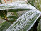 schneebedecktes blatt