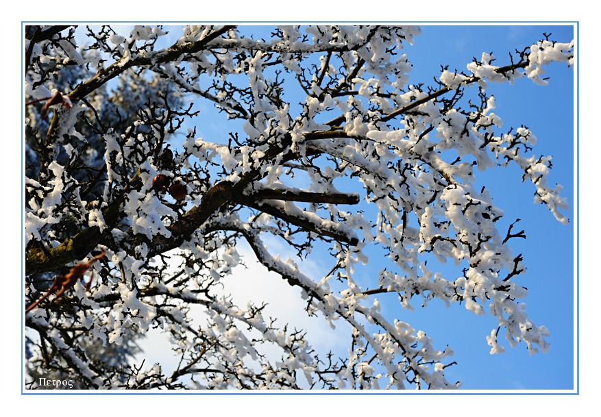schneeblüten