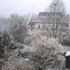 Schneeblütentreiben ...