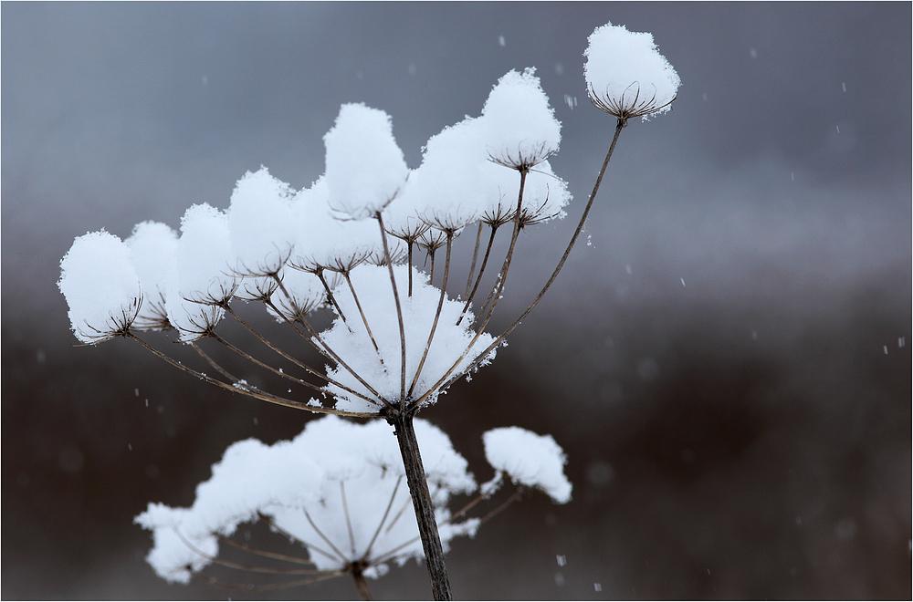 Schneefänger