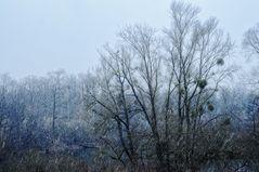 Schneefall im Groschenwasser