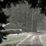 Schneefall vom feinsten