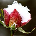 Schneeflocken....