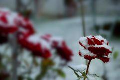 * Schneeflöckchen, Weißröckchen... warum kommst du jetzt schon geschneit? * * * * * * * ***