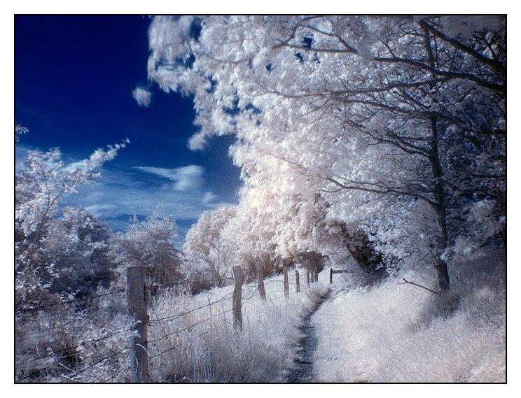 Schneefreier Schnee