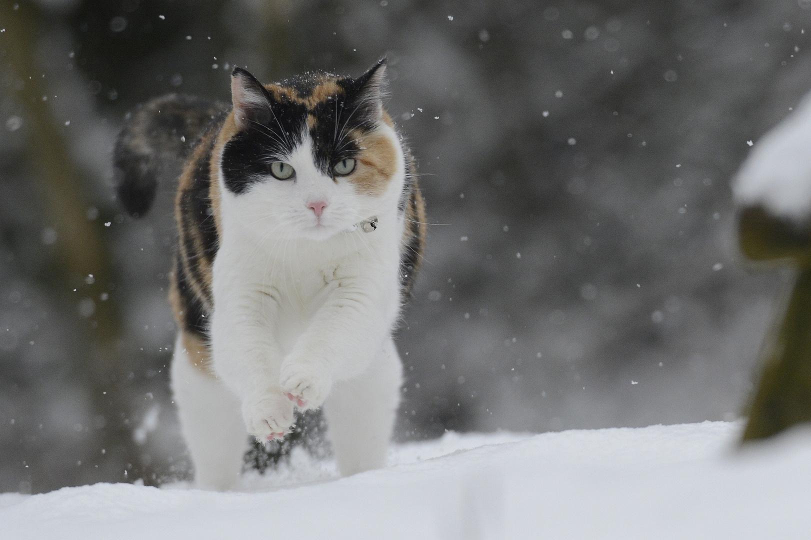 """""""Schneegestöber"""" oder """"Lyra kann rennen""""..."""