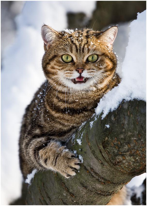 """""""Schneehäschen"""""""