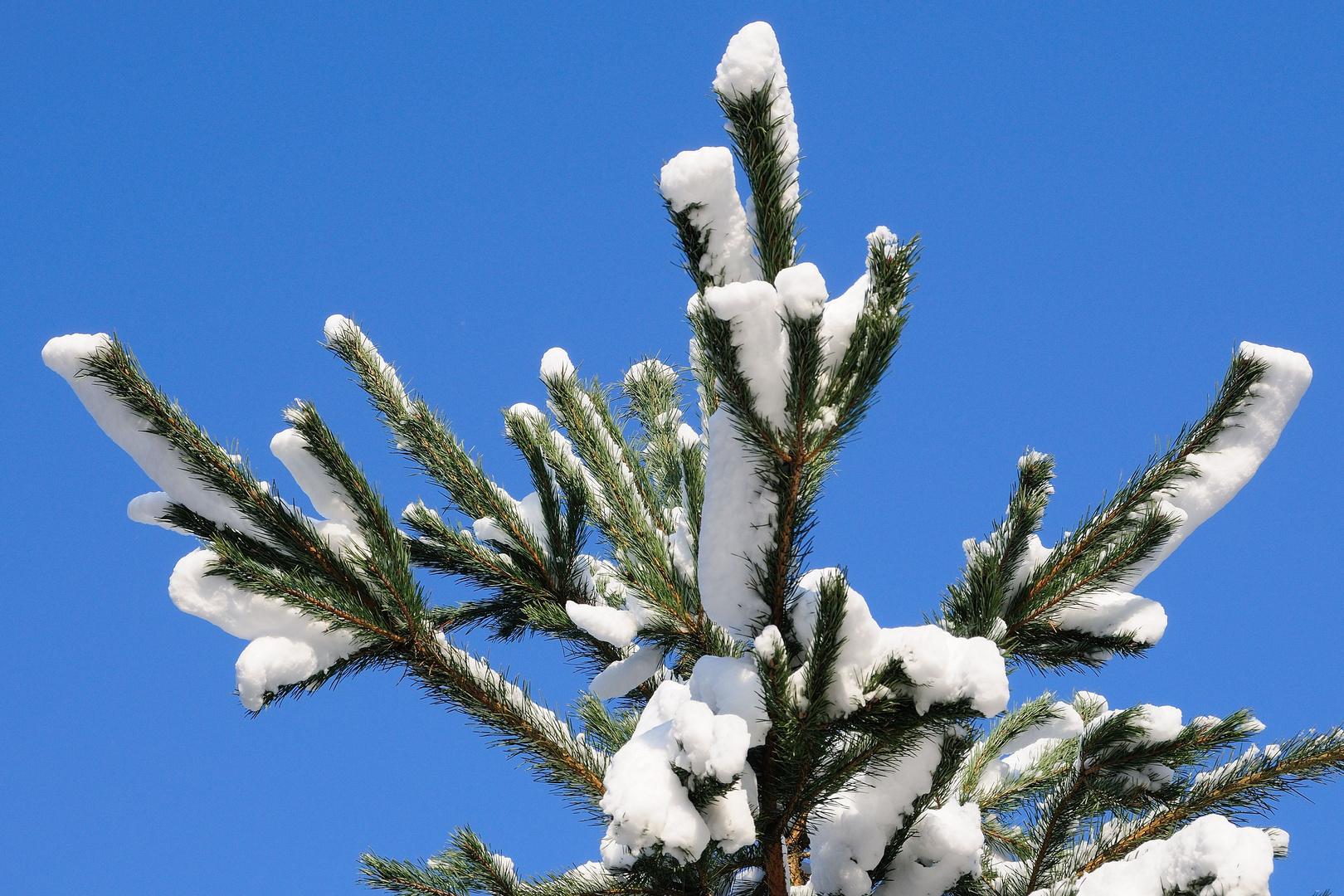 Schneehaube 3