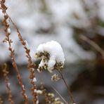 Schneehauben....