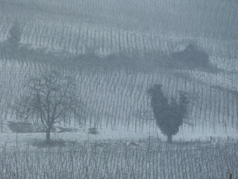 ? ? SchneeHuhn drüben im Nebel