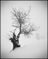 Schneeinsland ;-)