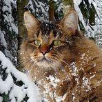 Schneekaterchen