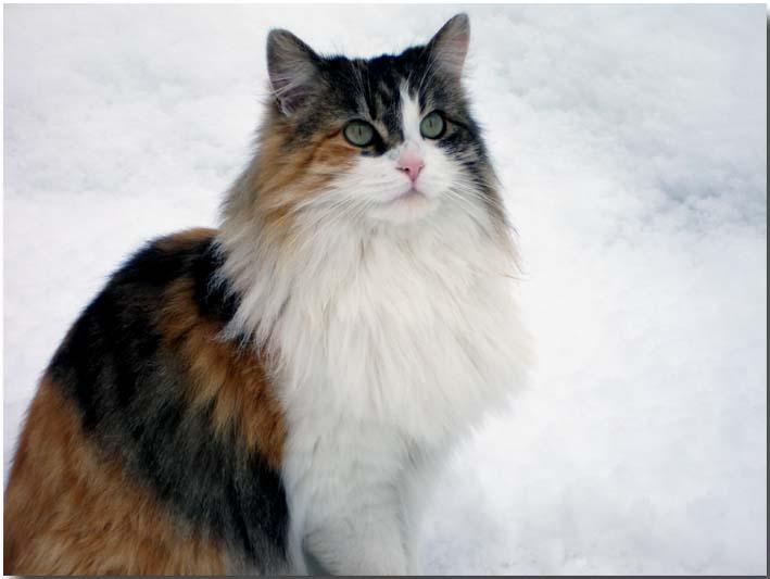 Schneekönigin...