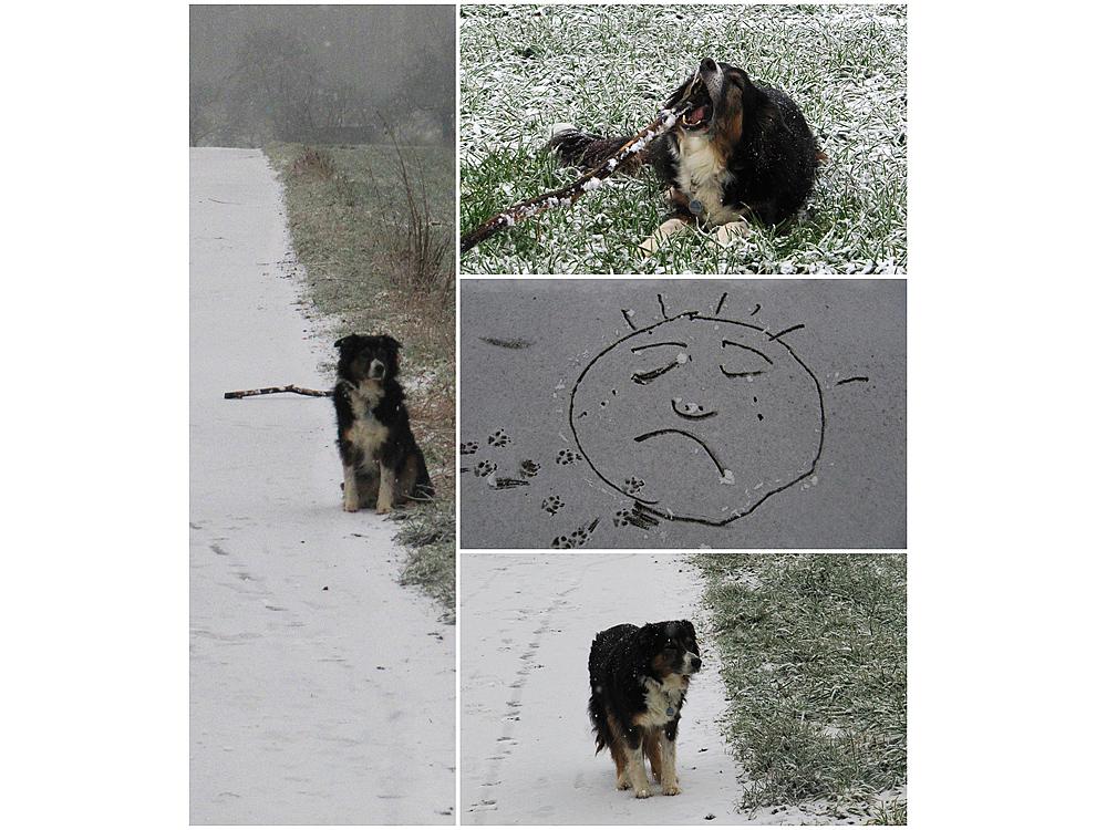SchneeLaika