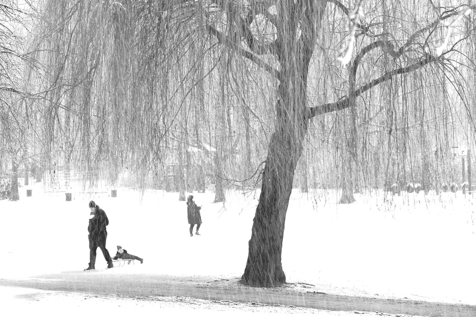 Schneelandschaft im Grüngürtel Köln