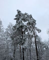 schneelastig