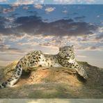 Schneeleopard im Nürnberger Tiergarten - Aufnahme interpretiert und bearbeitet mit Photoshop
