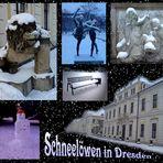 Schneelöwen in Dresden gesichtet...