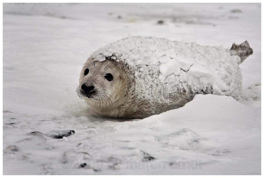 Schneepaniert auf Helgoland