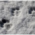 * Schneepfötchen *