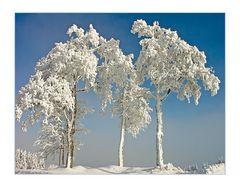 Schneeprächtige Baumgruppe...