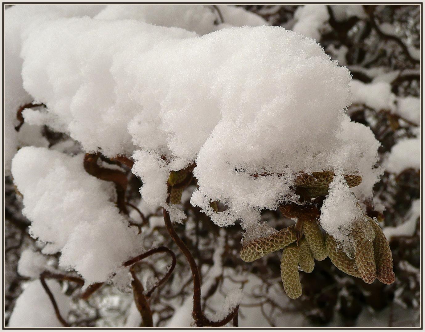 Schneeraupe
