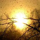 Schneeregen und Sonnenschein