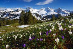 Schneereicher Frühling