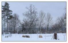 Schneeschafe... :-)