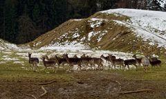 Schneeschmelze im Wildgehege beim Bäckerseppl! (1)
