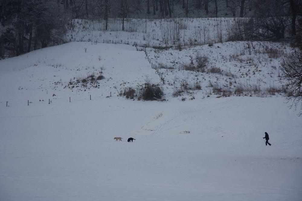 Schneespaziergang, mit Hunden