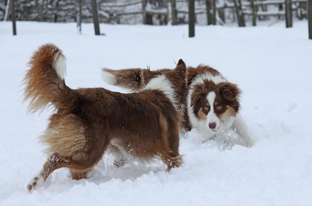 Schneespiele 2