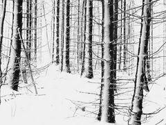 Schneestangen die Zweite