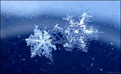 Schneesterne...
