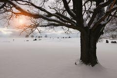 Schneeträume