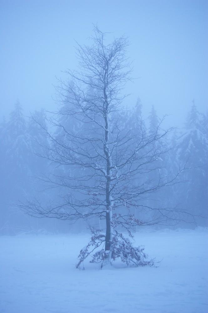 Schneetraum