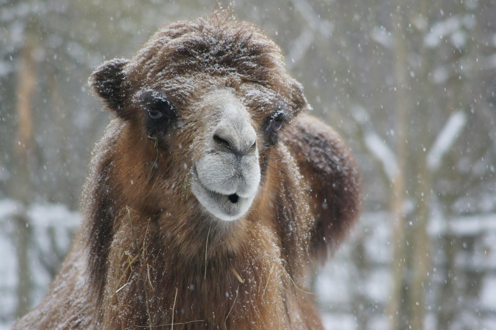 Schneetreiben im Zoo in Aschersleben