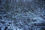 Schneeverwirrung