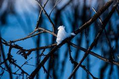 Schneevogel.  .DSC_3004