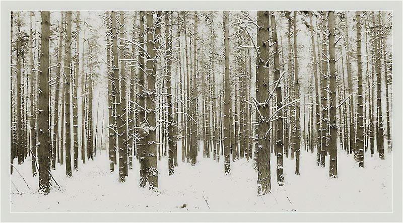 Schneewald... (od. Teewald) :-))