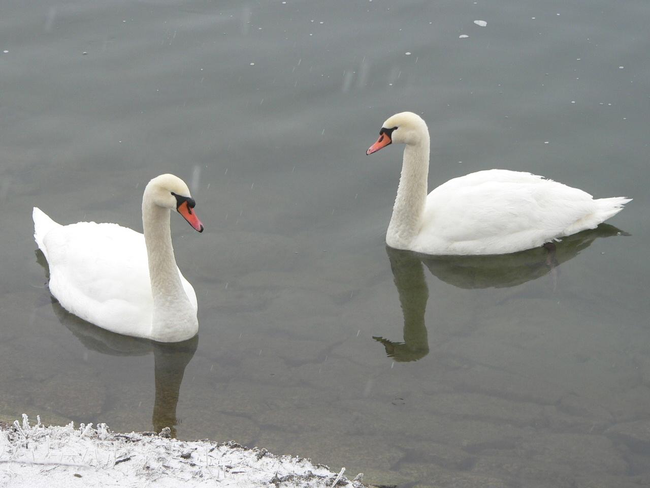 schneeweiß, die beiden