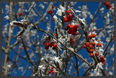 Schneeweißchen und Rosenrot ...