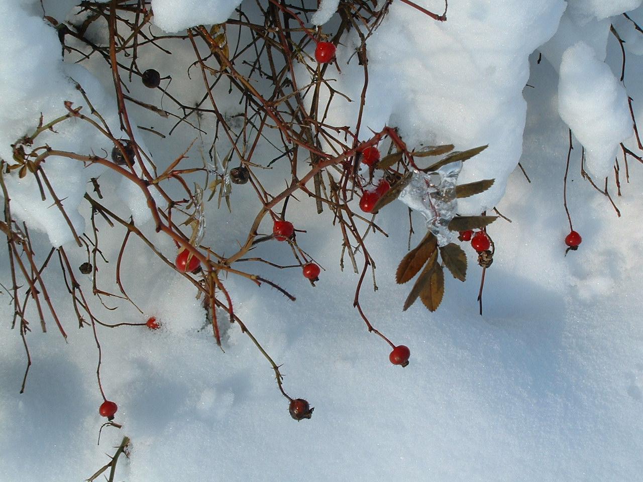 Schneewittchen in Einzelteilen