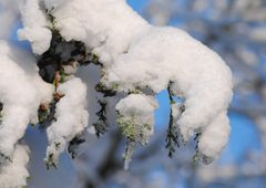 Schneezauber