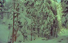 Schneezeit  .....