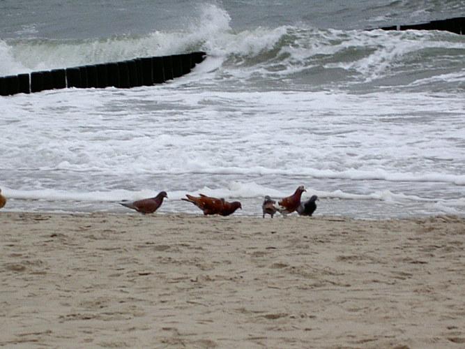 Schnell picken, die Welle kommt!