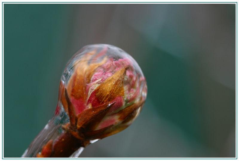 Schnellball eingefroren .........