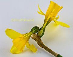 Schnittblumen -.wörtlich genommen..##1409#
